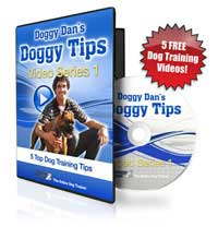 the online dog trainer by doggy dan
